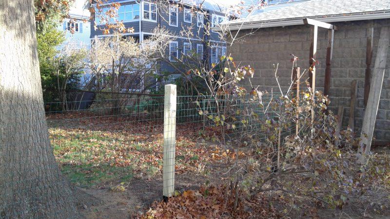 back-yard-fence