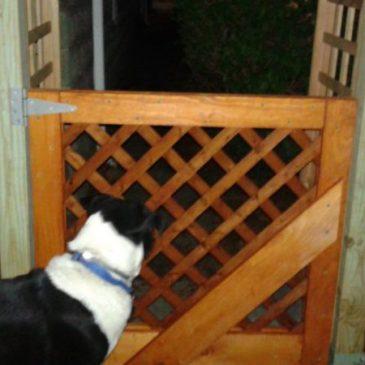 The Arlington Chronicles Part ?? — Wanna Help Me Build a Fence?