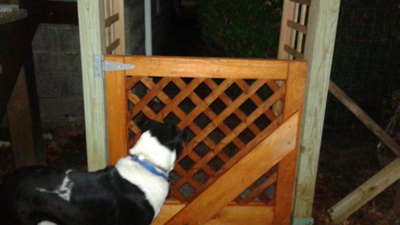 jack-contemplates-gate