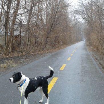 March 31 Snowfall