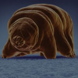 How Can You Not Like Tardigrades?